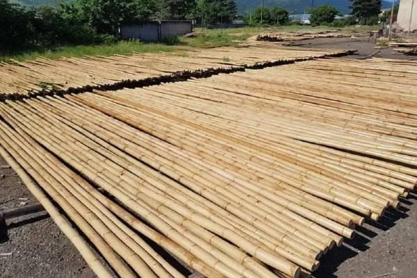 Bamboepalen foto buiten